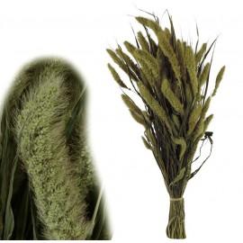 Setaria Natural 150 gr
