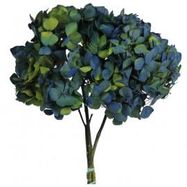 Hortensia Azul / Verde Ø 23 cm