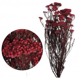 Helychrisium Diosmi (arroz) Rosa Fuerte