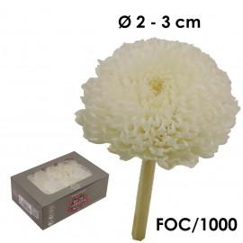 Focus Crisantemo Blanco (8ud)