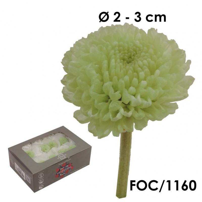 Focus Crisantemo Verde Menta (8ud)