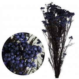 Helychrisium Diosmi (arroz) Azul