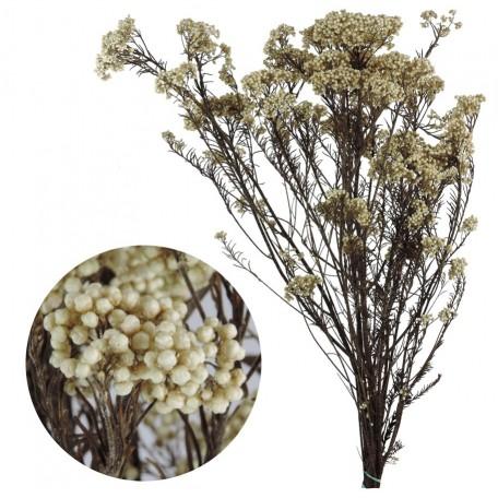 Helychrisium diosmi arroz blanco natural for Arroz blanco cocina al natural