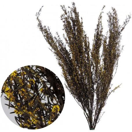 Grabia 30-60 cm Amarillo
