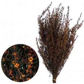 Grabia 30-60 cm Naranja