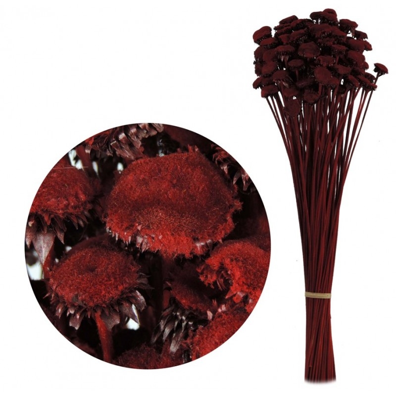Pali Pala Rojo 60 cm