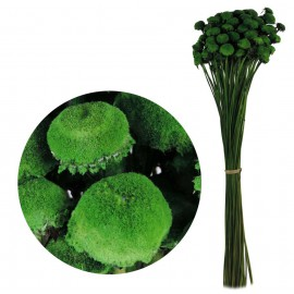 Pali Pala Verde 60 cm