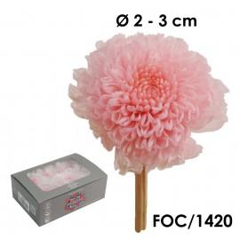 Focus Crisantemo Rosa (8ud)