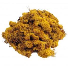 Musgo Finlandes Amarillo Mostaza 500 gr