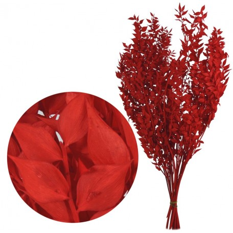 Ruscus Pres Rojo