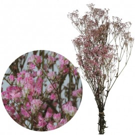 Gypsophila Paniculata Rosa...