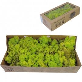 Musgo Verde Lima 500 gr Verd