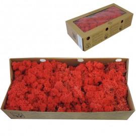 Musgo Rojo 500 gr Verd