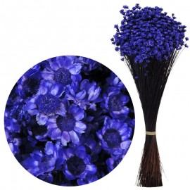 Glixia Violeta Oscuro 75 gr