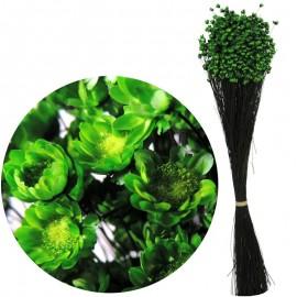 Glixia Verde 75 gr
