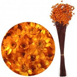 Glixia Naranja 75 gr