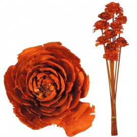 Cedar Rose Naranja (10ud)