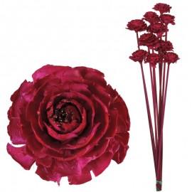 Cedar Rose Fucsia (10ud)