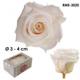 Rosa Mediana Ø 4 cm...