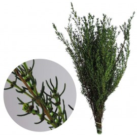 Grabia 30-60 cm Verde Claro