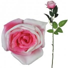 Rosa Abierta Latex 62cm...