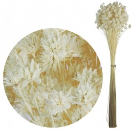Hill Flower Blanco 60 cm