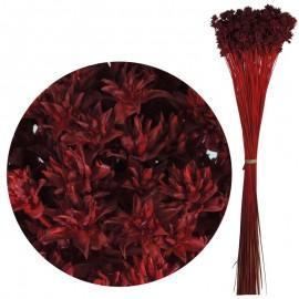 Hill Flower Rojo 60 cm