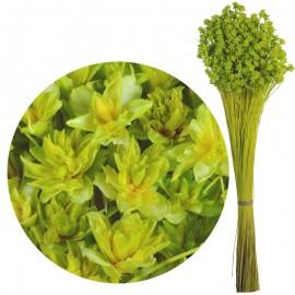 Hill Flower Verde Lima 60 cm
