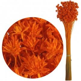 Hill Flower Naranja 60 cm
