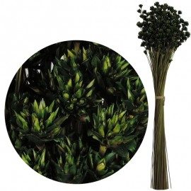 Hill Flower Verde Oscuro 60 cm