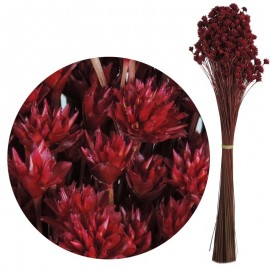 Hill Flower Fucsia 60 cm