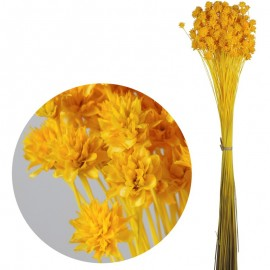 Hill Flower Amarillo 60 cm