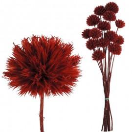 Echinops Pequeño Rojo