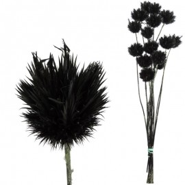 Echinops Pequeño Negro
