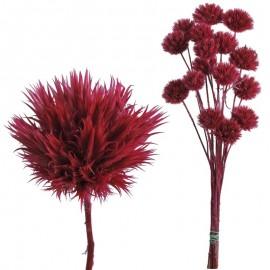 Echinops Pequeño Fucsia