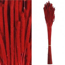 Phleum Rojo Pres.