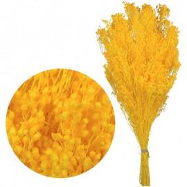Brooms Pres. Amarillo 100 grs