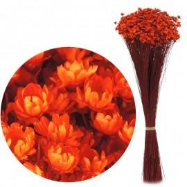 Glixia Naranja Oscuro 75 gr