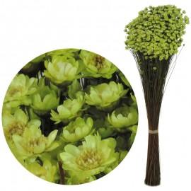 Glixia Verde Lima 75 gr
