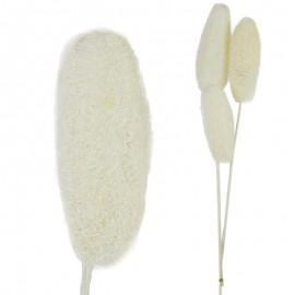 Luffa 3 ud Blanco