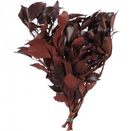 Hedera Arborea Rojo Pres