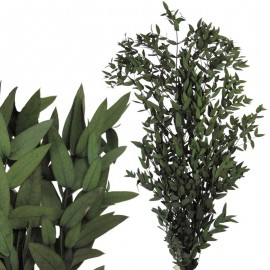 Parvifolia Verde Pres