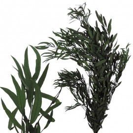 Eucaliptus Nicoly Verde Pres