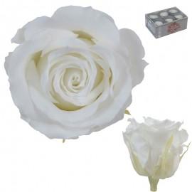 Rosa Estandar Blanca (x6 ud)