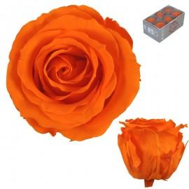 Extra Rosa Ø 6 cm Naranja...