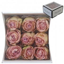 Rosas Wham (9 ud)