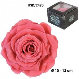 Rosa King Ø 12 cm Rosa...
