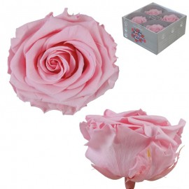 Rosa Premium Rosa Pastel...