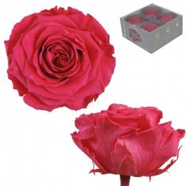 Rosa Premium Rosa Oscuro...