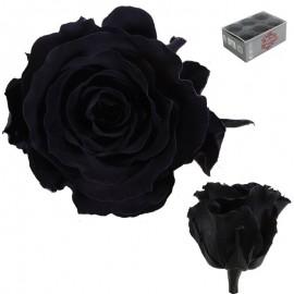 Rosa Estandar Negro (x6 ud)